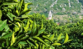 Church of Saint Nicholas Muster Komiza olive grove