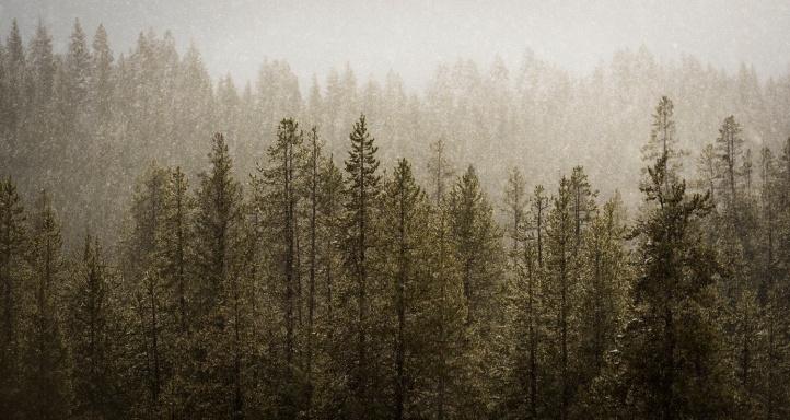 Photograph by Timothy Behuniak.