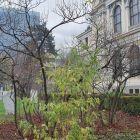 Zemaljski muzej u Sarajevu 1